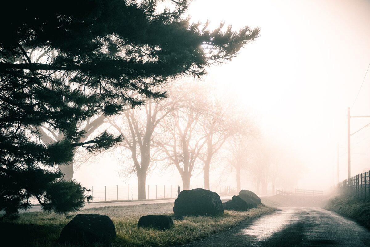 trees 5776184 1920